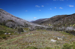 Kosciuszko National Park in Australia Royalty Free Stock Images