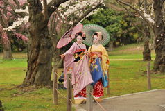 Kosen and Mamechiho Geisha stand under sakura tree Stock Photo