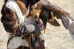 Kosh-Agach, Russland - 21. September 2014: der Jäger mit einem Adler Stockbilder