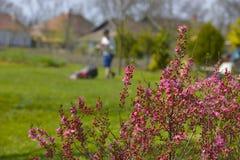 kosisz trawnik, Zdjęcia Stock