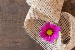 Kosmeenblüte Lizenzfreie Stockbilder