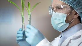 Kosmetischer Laborant, der sorgfältig Proben überprüft, bevor Auszüge genommen werden stockbilder