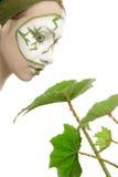 kosmetyków zielonej rośliny skincare Obrazy Royalty Free