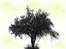 Kosmische lichte boom Stock Afbeelding