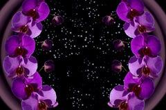 Kosmische Orchidee Lizenzfreie Stockbilder