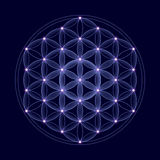 Kosmisk blomma av liv med stjärnor Royaltyfri Foto