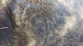 Kosmki mgła taniec na wodzie zbiory