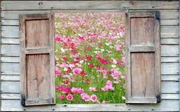 Kosmosów kwiatów pola Obraz Stock