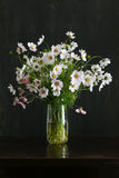 Kosmos blommar buketten i den Glass vasgruppen på mörk bakgrund Arkivfoton