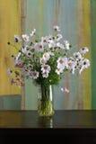 Kosmos blommar buketten i den Glass vasgruppen på mörk bakgrund Royaltyfri Bild
