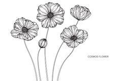 Kosmos blommar teckningen och skissar med linje-konst på den vita backgroen Royaltyfria Bilder