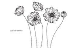 Kosmos blommar teckningen och skissar med linje-konst på den vita backgroen Arkivbilder