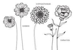 Kosmos, Chrysant, Anjerbloemen het trekken en schets royalty-vrije illustratie