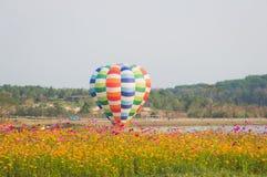 Kosmosblume und bunter Ballon lizenzfreies stockbild