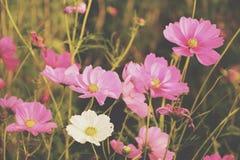 Kosmosträdgårdlantgård Royaltyfria Foton