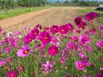 Kosmosu kwiatu pole 02 Zdjęcia Stock