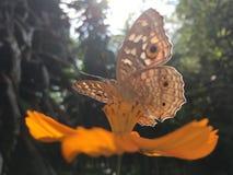 Kosmosu motyl i kwiat obraz royalty free