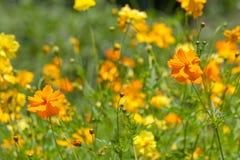 kosmosu pola kwiat Obrazy Stock