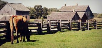 Kostaket Village Arkivbild