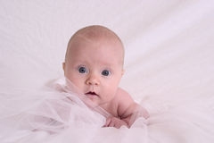 Kostbare baby stock afbeelding
