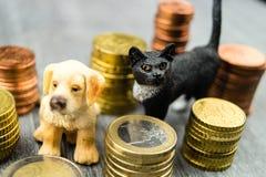 Kosten eines Haustieres lizenzfreie stockfotografie