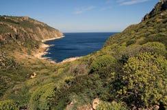 Kosten en Mediterrane vegetatie royalty-vrije stock fotografie
