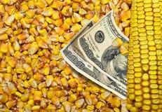Kosten Mais lizenzfreie stockfotos