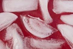 Kostki lodu zamykają up Zdjęcie Stock