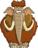 Kostrzewiasty mamut Obraz Royalty Free