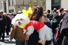 kostymerad hund Arkivfoton