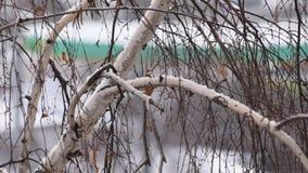 Kosy śnieżni spadki na tle bezlistny brzozy drzewo koronują w mieście zbiory wideo
