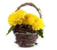 Kosz żółci kwiaty Zdjęcia Royalty Free