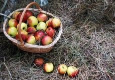 Kosz Jabłka Fotografia Stock