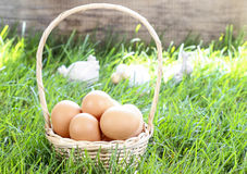 Kosz jajka na trawie Zdjęcia Royalty Free
