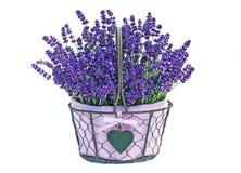 Kosz lawendowi kwiaty Obrazy Royalty Free