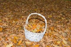 Kosz nieboszczyk pełno opuszcza na ziemi w jesieni Zdjęcie Royalty Free