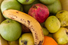 kosz owoc Obrazy Royalty Free