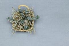 Kosz z białymi kwiatami i eukaliptusem rozgałęzia się na popielatym tle zdjęcie royalty free