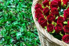 Kosz z czerwonymi różami na trawy tle Ostrość na różach Obrazy Royalty Free