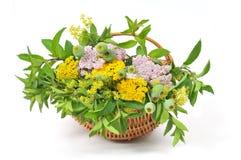 Kosz z herbacianymi roślinami fotografia stock