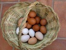Kosz z jajkami Obrazy Stock