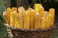 Kosz z kukurydzanym żniwem obrazy stock