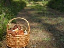 Kosz z pieczarkami Fotografia Stock