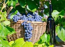 Kosz z winogronami Zdjęcia Royalty Free