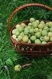 Kosz zieleni jabłka Obrazy Royalty Free