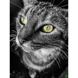 Koszerny kot i jej ładni oczy fotografia stock