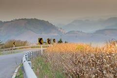Koszowa droga Fotografia Stock
