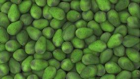 Koszt stały Wielki Avocado stos Obraz Stock
