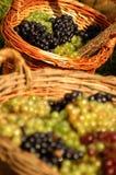koszy winogron Obraz Royalty Free