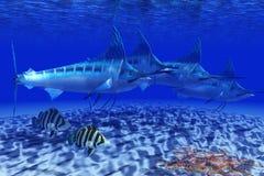 Błękitnego Marlin paczka Obrazy Royalty Free